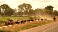 Argentina 2015. Gaucho's around Salta (janvandijk01) Tags: horse argentina cowboy gauchos salta 2015 argentini
