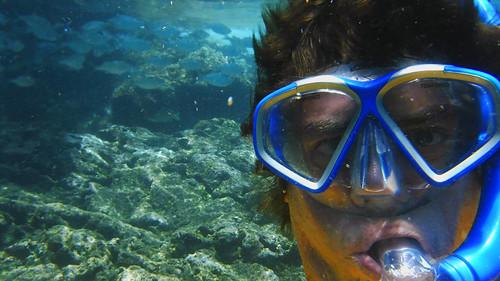 Sharks Cove 2015 17