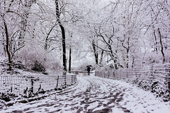 Simple beauty in everyday life (RomanK Photography) Tags: nyc newyorkcity snow nature centralpark manhattan snowstorm streetphotography sonyalpha