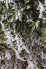 _MG_0970 (schamrock77) Tags: winter italy mountain ice freezing natura inverno montagna friuli ghiaccio galaverna canon6d 35f2is
