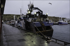 47 - Southerly (North Light) Tags: weather coast scotland harbour gale fishingboats caithness trawlers scrabsterharbour