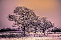 Hoar Frost on the Weald VI (nedjetwave) Tags: trees landscape kent marden nikond70s hdr hawfrost hss staplehurst tonemapped nikkor70300vr kentishweald sliderssunday fiveashlane