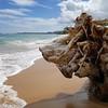 Lion Face Driftwood at Kealia Beach, Kapaa, Kauai, Hawaii (BenRogersWPG) Tags: 3 beach face hawaii lion samsung note driftwood galaxy kauai android kapaa kealia instagram samsunggalaxynote3 lionfacedriftwoodatkealiabeachkapaakauaihawaii