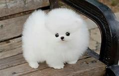 ¿Qué tal este perrito? (Tu Nexo De) Tags: perro mascotas hombre perrito mejoramigo tnxde