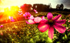 seasons end (Frank ) Tags: sony nex fisheye converter summer flowers petals europe wideangle frnk 100faves 200faves 300faves topf100 topf200 topf300 creativeshotinvited
