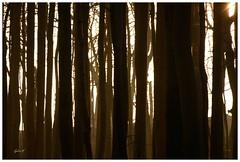 Sonnenaufgang im Buchenwald (Caora) Tags: coast buchenwald nikon balticsea rgen ostsee frhling kreidefelsen d7100