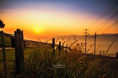 GOOD MORNING, ALTSTTTEN, SWITZERLAND (VoNDutch6188) Tags: sunset color sunrise switzerland pflanzen gras stgallen sonnenaufgang farben katon altsttten
