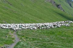 Pireneje 2012 - Luchonnais