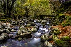 L.lindes [Explored] (titodixebra) Tags: autumn rio ro asturias bosque l otoo seda riu asturies lindes seronda quirs viesca llindes ru