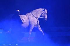 Cavallo (savioarchi) Tags: nature animal friend natura cavallo animali hourse cavallobianco whitehourse