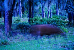 **Sensitive Content** Rare Ghost Heifer (Gio-Photography) Tags: nikon dslr users d3000