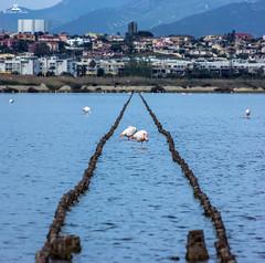 Panorama 3-1 (89lilly) Tags: birds canon photography photo flamingos uccelli cagliari poetto molentargius fenicotteri stagno quartu canon550d