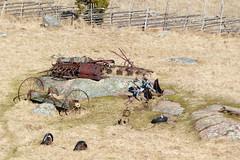 HFF (evisdotter) Tags: fence spring rust rost land hff saltvik grdesgrd