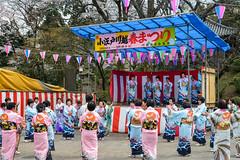 Hanami event in Kawagoe (AnotherSaru - Limited mode) Tags: japan japanese spring gathering  sakura cherryblossoms kawagoe hanami  blooming saitamaken  2016   saitamaprefecture kawagoeshi