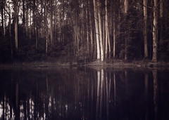 Ghosts of my Heart (AJWeiss71) Tags: trees lake reflection nature water forest woodland reflections dark landscape outdoors still pond woods scenery mood moody quiet darkness foreboding scenic peaceful tranquility australia monochromatic eerie ethereal haunting wilderness stillness tranquil amyweiss