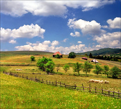 There is a place for everybody..:) (Katarina 2353) Tags: summer mountain film field landscape nikon europe serbia valley srbija zlatibor katarinastefanovic katarina2353