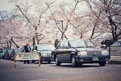 写真日記 #20160331 (YUSHENG HSU) Tags: 桜 日本 タクシー 岡山 岡山後楽園