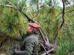 Pai - Galveias (mariamartins155) Tags: verde natureza campo alentejo pai pinheiro pinhas