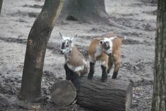 DSC_0034 (Rinswid) Tags: park nature animal spring kharkov feldman ecopark