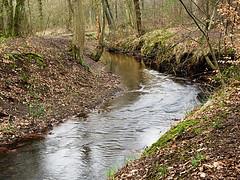Duisburg - Wambach III (Jo Dudek) Tags: wasser outdoor laub natur pflanze duisburg wald blätter bäume wambach