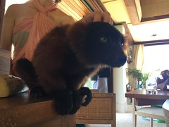 IMG_9006 (hannes g) Tags: island hannes richard das tortola branson magazin bvi necker briefkastenfirma grassegger panamaleaks
