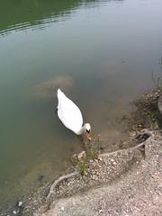 2016-04-02 12.59.01 (kitsosmitsos) Tags: lake parnitha    beletsi  parnais mpeletsi ippokrateiospoliteia