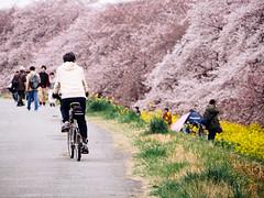 25988671184_a75be8a8cc_o (jennifer.ll) Tags: japan jp saitamaken kumagayashi