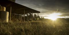 Summer's Eve (Jaims Gibson APSNZ) Tags: sunset newzealand summer barn lensflare hay bales starburst tse jamesgibson