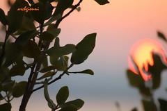 incredible sun (archgionni) Tags: trees sunset sky sun verde green nature leaves foglie alberi tramonto natura shades cielo sole lumen sfumature christiangroup