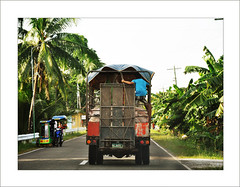 Truckload of pigs (pickled_newt) Tags: truck philippines pigs visayas southerncebu