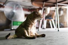 Street cats (Fung0131) Tags: hk cats hongkong wetmarket streetcat tsuenwan  fukloi