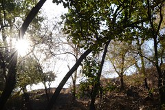 In the woods (cn174) Tags: india nationalpark tiger tigers rajasthan ranthambhore tigerreserve ranthambhorenationalpark ranthambhorebagh