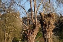 DSCF0581 (kuzdra) Tags: trees france tree spring village arbres arbre anjou   dene