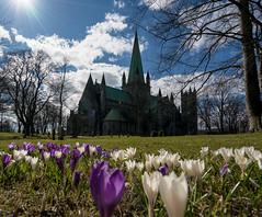 Nidaros Cathedral Spring Edition (Bjrn-Kristian) Tags: sun flower norway spring cathedral trondheim vr nidarosdomen nidaros
