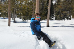Olsen, Mr. Cool, sitting in the snow (Aggiewelshes) Tags: travel winter snow april wyoming olsen jacksonhole colterbay grandtetonnationalpark 2016 gtnp