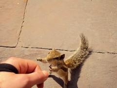 Hi! - Agra (beatricebiruspoli) Tags: portrait india cute nature animal animals fun amazing natur