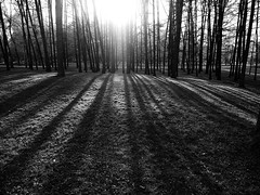P4290295 (Andrey Narchuk) Tags: park portrait blackandwhite black spring moscow