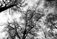 Trees (Kent Holloway) Tags: au australia tasmania steppes leicam6 fujiacros100 summicron35mm