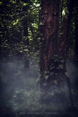 The silence of the nature (Davide Solurghi Photography) Tags: morning trees portrait alberi woods outdoor surrealism picture surreal portraiture bosco mattina mattino surreale ritrattistica davidesolurghi davidesolurghiphotography
