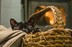 Tranquility (lvaroRo) Tags: sleeping chimney cat fire warm dof basket bokeh sleep kitty gato desenfoque gatita calor gatito cesta durmiendo agusto bokehlicious