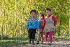 Y1215.0213.Hu Tho.Sapa.Lo Cai. (hoanglongphoto) Tags: life trees girls people sunlight color girl canon children asian three asia afternoon outdoor bamboo vietnam childrens ba dailylife sapa sunnyafternoon colorimage ngi cy mu cytre threechildren locai nng cucsng ithng grouppeople trem thcvt chu nngchiu ngnam buichiu bgi hutho hngtre cucsnghngngy canoneos1dx nhmu nhngatr canonzoomlensef70200mmf28lisiiusm nhmngi tremgi nhngbgi baatr