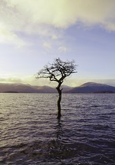 Milarrochy Bay (Michelle O'Connell Photography) Tags: winter scotland flooding scenery lochlomond balmaha lonesometree scottishwinter milarrochybay michelleoconnellphotography