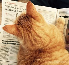 Wizcat reads newspaper (cindydebree.nl) Tags: red pet apple animal cat rouge reading newspaper kat feline funny katze rood huisdier dier kater iphone grappig krant lezen rodekater pzc krantlezen iphone6 iphone6plus vegetarian6 wizcat