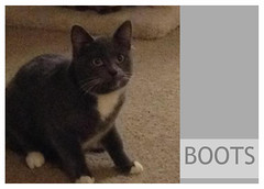 Boots-02 (Ali Crehan) Tags: cat february shelter 2016