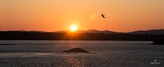 Buenos Das! (Mafe Ramirez) Tags: sky sun bird sol maana rio river amanecer pajaro naranja gaviota vuelo volando volar maferamirez