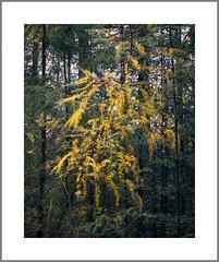 Speulder bos Netherlands (Bert Vliegen) Tags: nature netherlands forest nederland kodakektachromee100vs howtekd4000 chamonix45n2 rodenstocksironars180mm