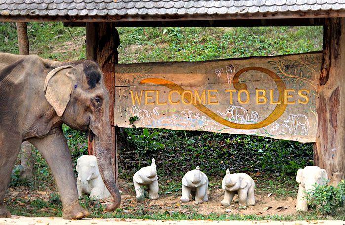 Boon Lott Elephant Sanctuary