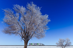 On the road... (pn.praveen) Tags: blue trees winter truck frozen highway frost hoarfrost nevada bluesky freeway fedex ontheroad winterwonderland deciduoustrees icytrees frostytrees