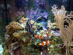 Marine Aquarium (Heaven`s Gate (John)) Tags: sea fish nature water coral aquarium marine cardinal salt shrimp clownfish aquatic domino cleaner damsel johndalkin heavensgatejohn
