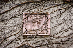 Tapestry (Brînzei) Tags: winter signs vines decay relief ornaments m42 junkyard murky manualfocus ★ aviatorilor explored cavemanart bucurești lzos jupiter985mmf2mc sonynex7